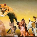 animals-2222007_1920