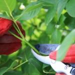 Giardinaggio-e-tipi-di-rose-1728x800_c