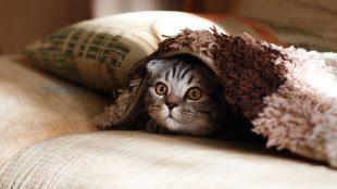 accessori per il gatto