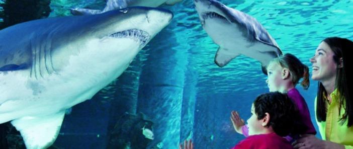 Coupon sconto per acquario di cattolica offerte shopping for Blu di metilene acquario